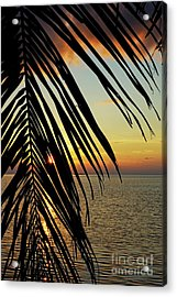 Sun Setting Over The Sea Seen Through A Silhouetted Coconut Palm Frond Acrylic Print
