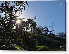 Acrylic Print featuring the photograph Sun Shines Through The Greenery by Matt Harang