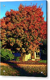 Sun-shining Autumn Acrylic Print