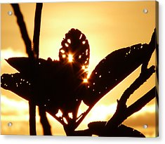 Sun Shining Through A Leaf Acrylic Print
