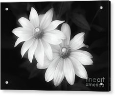 Sun Sisters In Black And White Acrylic Print
