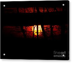 Acrylic Print featuring the photograph Sun Tree by Donald C Morgan