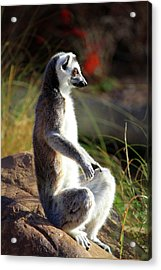 Sunbathing Acrylic Print by Inspirational Photo Creations Audrey Woods