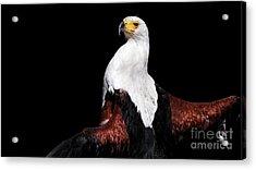 Sunbathing Eagle Acrylic Print