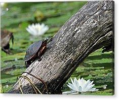Acrylic Print featuring the photograph Turtle Sunbathing by Glenn Gordon