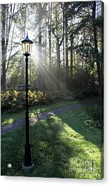 Sunbeam Illumination Acrylic Print