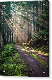 Sunbeam In Trees Portrait Acrylic Print
