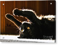 Sunbeam Kitty Acrylic Print