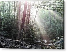Sunbeam Streaming Into The Forest Acrylic Print