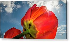 Acrylic Print featuring the photograph Sunbeams And Tulips by Adam Romanowicz