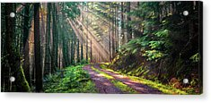Sunbeams In Trees Acrylic Print