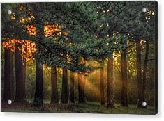 Sunbeams Through The Trees Acrylic Print