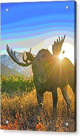 Sunburst In The Antler Abstract 1 Acrylic Print by Tim Grams