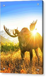 Sunburst In The Antler Abstract 2 Acrylic Print by Tim Grams
