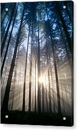 Sunburst In The Forest Acrylic Print by Greg Vaughn - Printscapes