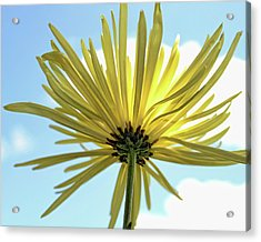 Acrylic Print featuring the photograph Sunburst by Judy Vincent