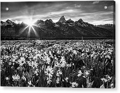 Sunburst Over Thee Tetons Acrylic Print