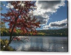 Sunburst Tree At Silvermine Lake Acrylic Print