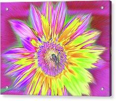 Sunbuzzy Acrylic Print