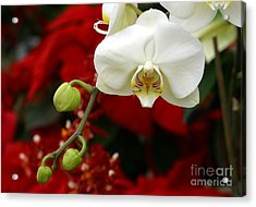 Sunday Afternoon Orchid Acrylic Print