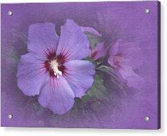 Sunday Hibiscus Acrylic Print