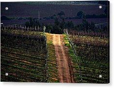 Sun Ray In The Vineyard Acrylic Print by Fernando Lopez Lago