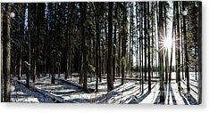 Sundial Forest Acrylic Print