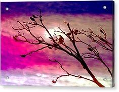 Sundown Acrylic Print by Holly Kempe