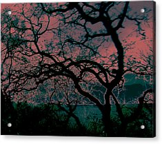 Sundown Acrylic Print by Tim Tanis