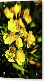 Acrylic Print featuring the photograph Sundrops by Onyonet  Photo Studios