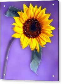 Sunflower 1 Acrylic Print by Joseph Gerges