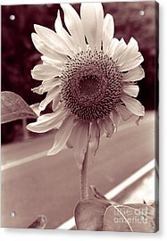 Acrylic Print featuring the photograph Sunflower 1 by Mukta Gupta