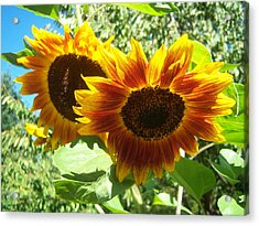 Sunflower 115 Acrylic Print by Ken Day