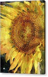 Sunflower 2254 Idp_2 Acrylic Print