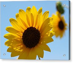 Sunflower 4 Acrylic Print by James Granberry
