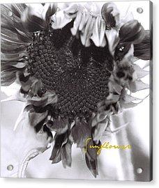 Acrylic Print featuring the photograph Sunflower by AnnaJanessa PhotoArt