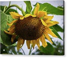 Sunflower Art II Acrylic Print