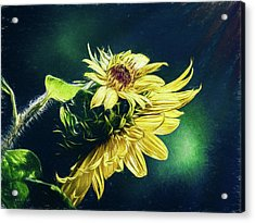 Sunflower At Sunrise Acrylic Print