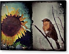 Sunflower Bird Diptych Acrylic Print