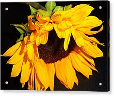 Sunflower Bliss Acrylic Print by Dottie Dees
