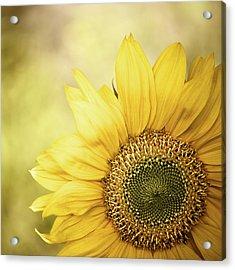 Sunflower Blossom With Bokeh Background Acrylic Print by Elisabeth Schmitt
