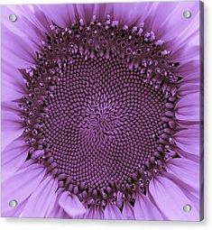 Sunflower Centered Purple Acrylic Print