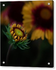 Acrylic Print featuring the photograph Sunflower by Cherie Duran