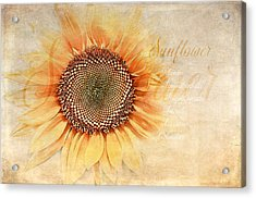 Sunflower Classification Acrylic Print by Terry Davis