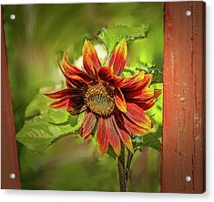 Acrylic Print featuring the photograph Sunflower #g5 by Leif Sohlman