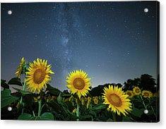 Sunflower Galaxy V Acrylic Print