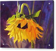 Sunflower Glow Acrylic Print by Marina Petro