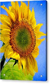 Sunflower Plant Acrylic Print