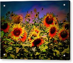 Sunflower Breeze Acrylic Print by Dorothy Berry-Lound