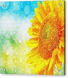 Sunflower In A Sunshower Acrylic Print